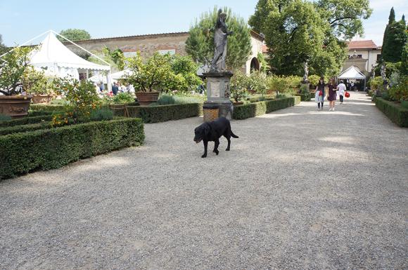 影の主役は「犬」でした〜フィレンツェ職人展_f0106597_00480467.jpg