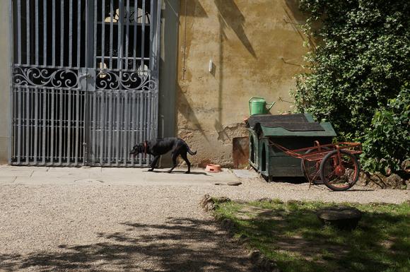 影の主役は「犬」でした〜フィレンツェ職人展_f0106597_00495937.jpg