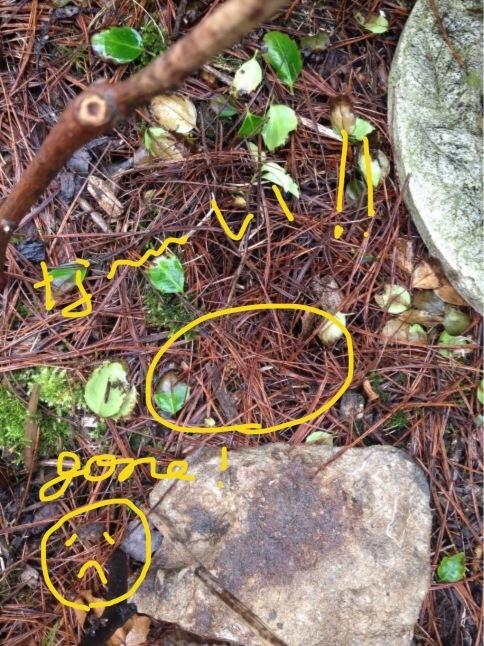 シクシク(T . T)  芽が、双葉が、、、_b0365715_00064052.jpg