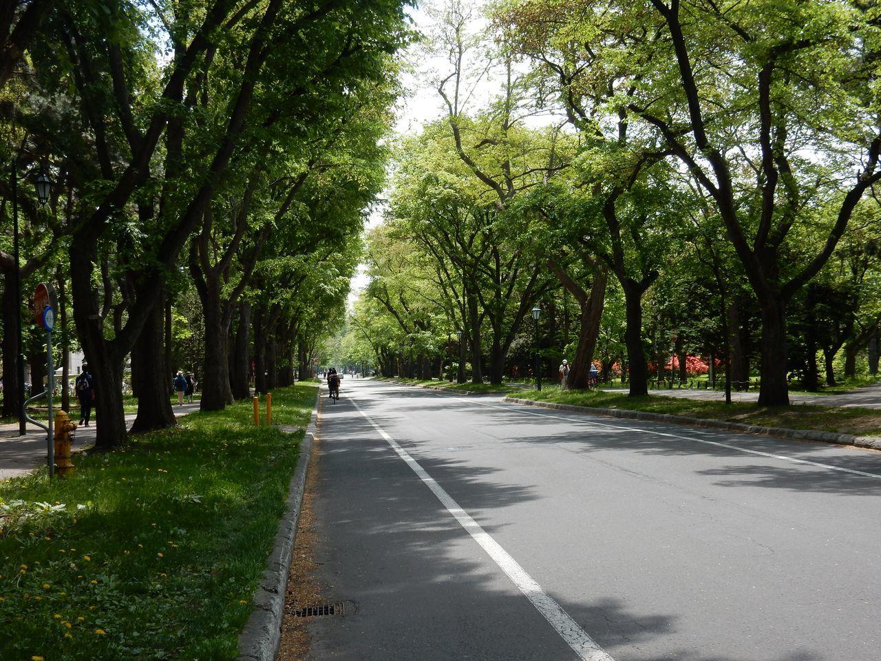 北大キャンパスは夏だった_c0025115_21094746.jpg
