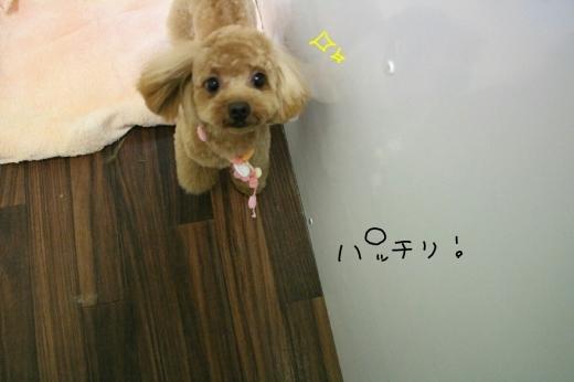 カラオケ!_b0130018_23123181.jpg