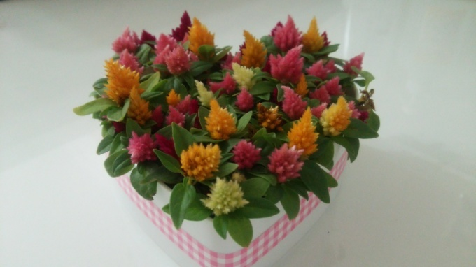 chirol HAIR さんからいただいたお花がかわいすぎる(*≧з≦)_c0350439_11104703.jpg