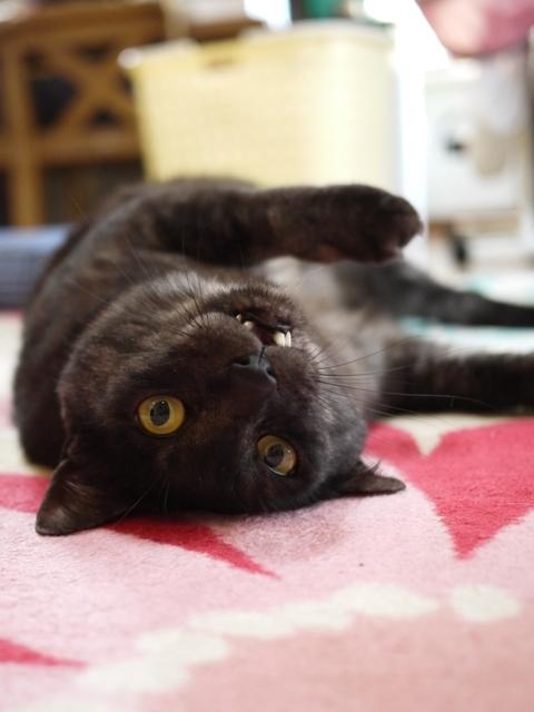 猫のお留守番 若くん編。_a0143140_20165872.jpg