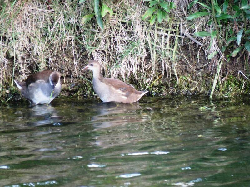 野鳥トレ 81 なぎさの池_b0227552_19365848.jpg