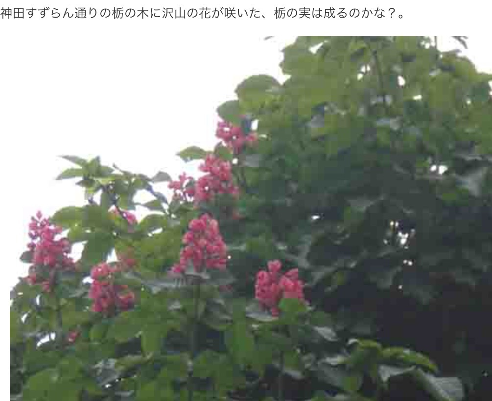a0053063_05145827.png
