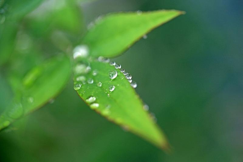 冷たい雨_e0305388_09225801.jpg