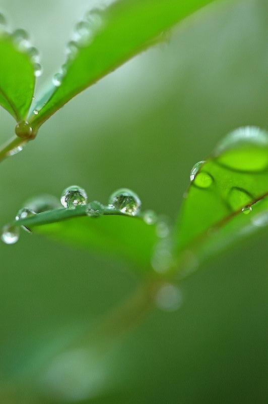 冷たい雨_e0305388_09230605.jpg