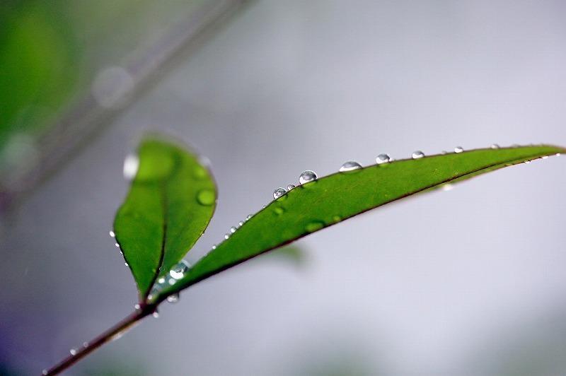 冷たい雨_e0305388_09230921.jpg
