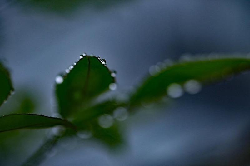 冷たい雨_e0305388_09231368.jpg