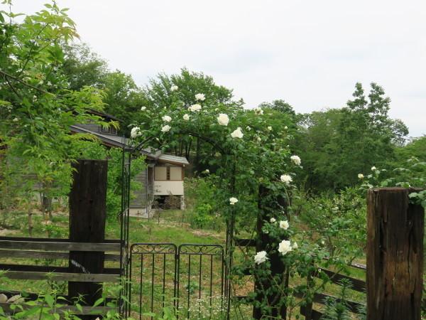 ラ・プロヴァンスにバラが咲く_e0271890_20521213.jpg