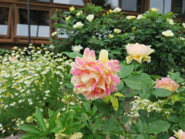 ラ・プロヴァンスにバラが咲く_e0271890_20582872.jpg