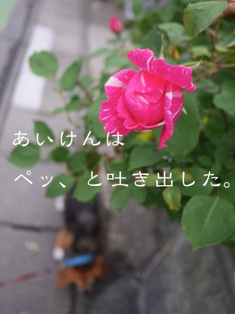 b0359692_08435374.jpg