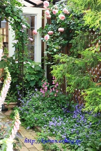 カンパニュラ・アルペンブルー 季節は少しづつ移ろって - miyorinの秘密のお庭