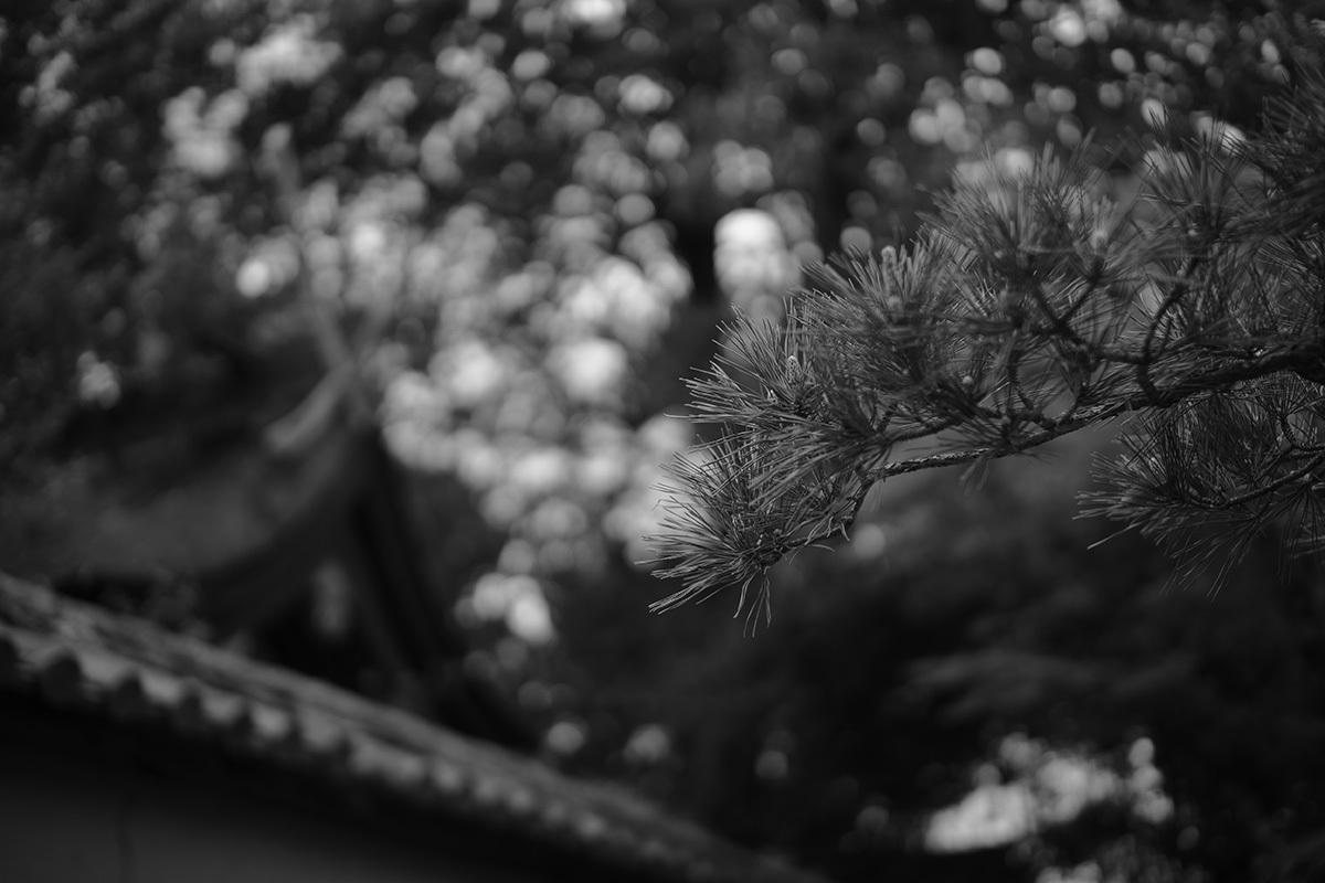 古都逍遥 Nara city #SONYα7II#RX1RII_c0065410_01223138.jpg