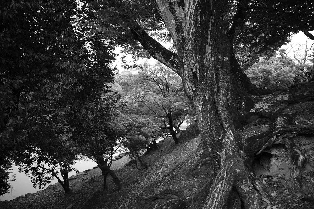 古都逍遥 Nara city #SONYα7II#RX1RII_c0065410_01225287.jpg