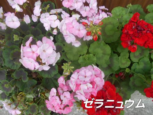 d0095910_05554266.jpg