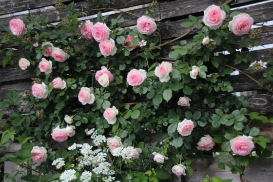 今朝の庭_b0132338_08210797.jpg