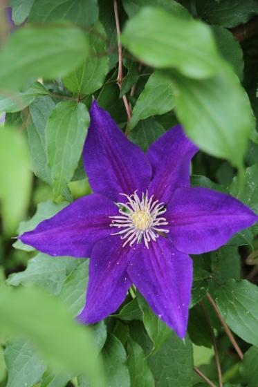 今朝の庭_b0132338_09125373.jpg
