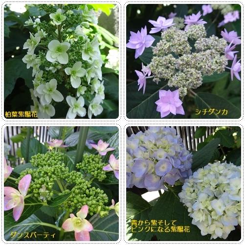 小さなバラ園 & 本 & 絹さや料理_a0084343_09572990.jpg