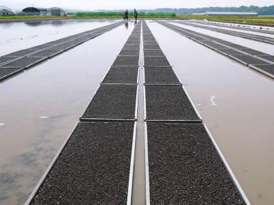 七城米 長尾農園 美しすぎる苗床を作り、よーいドン!でスタートです!_a0254656_17472571.jpg