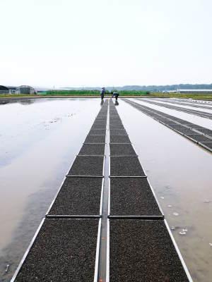 七城米 長尾農園 美しすぎる苗床を作り、よーいドン!でスタートです!_a0254656_17485621.jpg