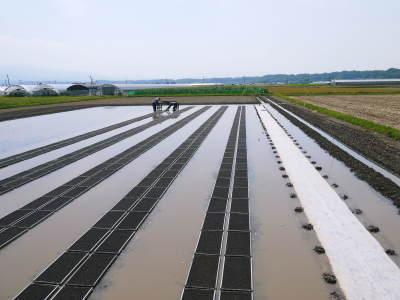 七城米 長尾農園 美しすぎる苗床を作り、よーいドン!でスタートです!_a0254656_17583585.jpg