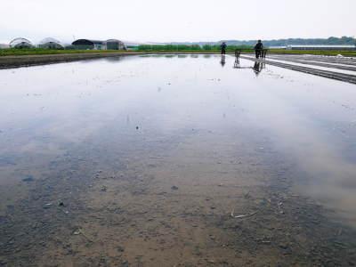 七城米 長尾農園 美しすぎる苗床を作り、よーいドン!でスタートです!_a0254656_18014316.jpg
