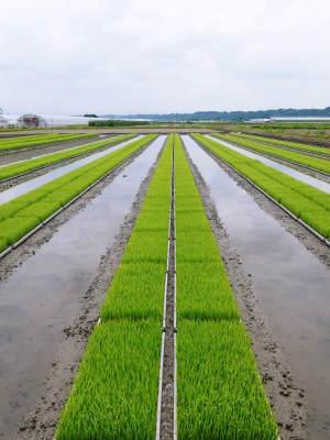 七城米 長尾農園 美しすぎる苗床を作り、よーいドン!でスタートです!_a0254656_18154589.jpg