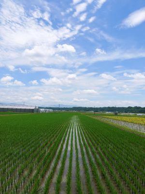 七城米 長尾農園 美しすぎる苗床を作り、よーいドン!でスタートです!_a0254656_18241355.jpg