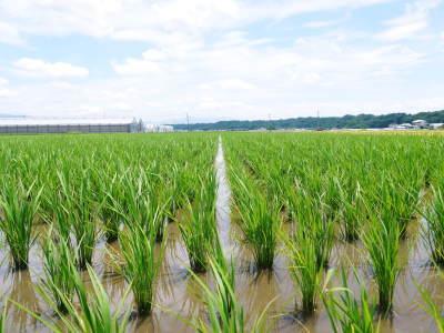 七城米 長尾農園 美しすぎる苗床を作り、よーいドン!でスタートです!_a0254656_18325884.jpg