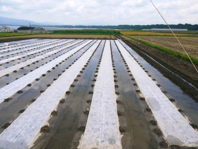 七城米 長尾農園 美しすぎる苗床を作り、よーいドン!でスタートです!_a0254656_18524628.jpg
