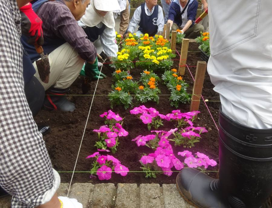 小平駅南口ロータリー花壇の花植え_f0059673_22164954.jpg