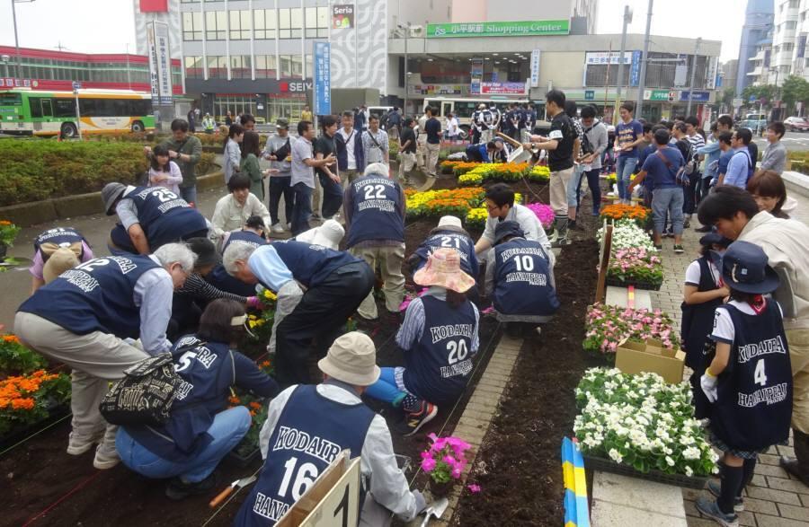小平駅南口ロータリー花壇の花植え_f0059673_22173069.jpg