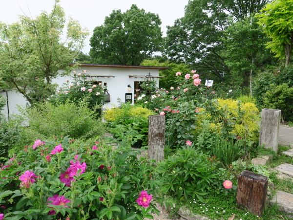 ラ・プロヴァンスにバラが咲く_e0271890_02372400.jpg