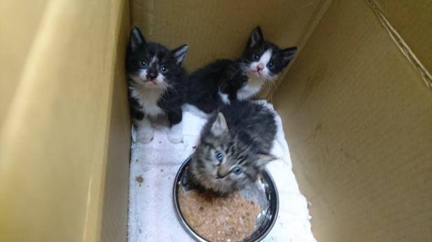 【移動先募集】センター(支所)収容の子猫・成猫(5/27訪問)_f0242002_11164661.jpg