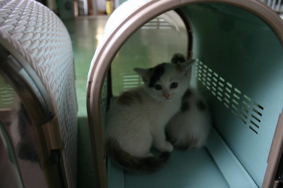 【移動先募集】センター(支所)収容の子猫・成猫(5/27訪問)_f0242002_11171391.jpg