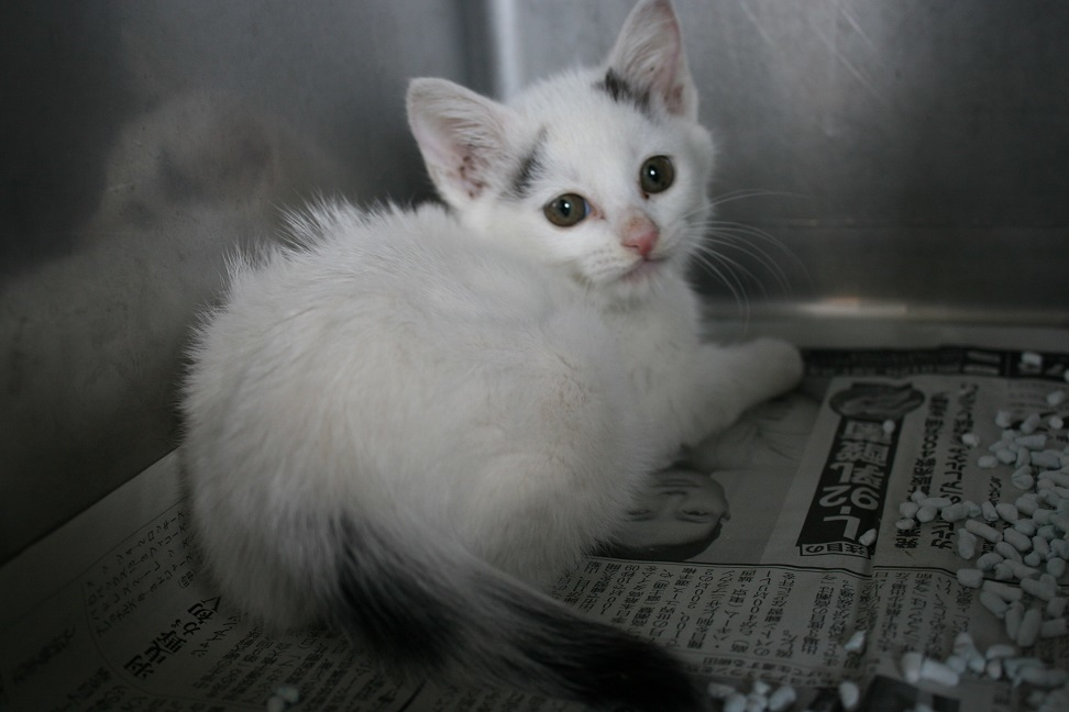 【移動先募集】センター(支所)収容の子猫・成猫(5/27訪問)_f0242002_11322019.jpg