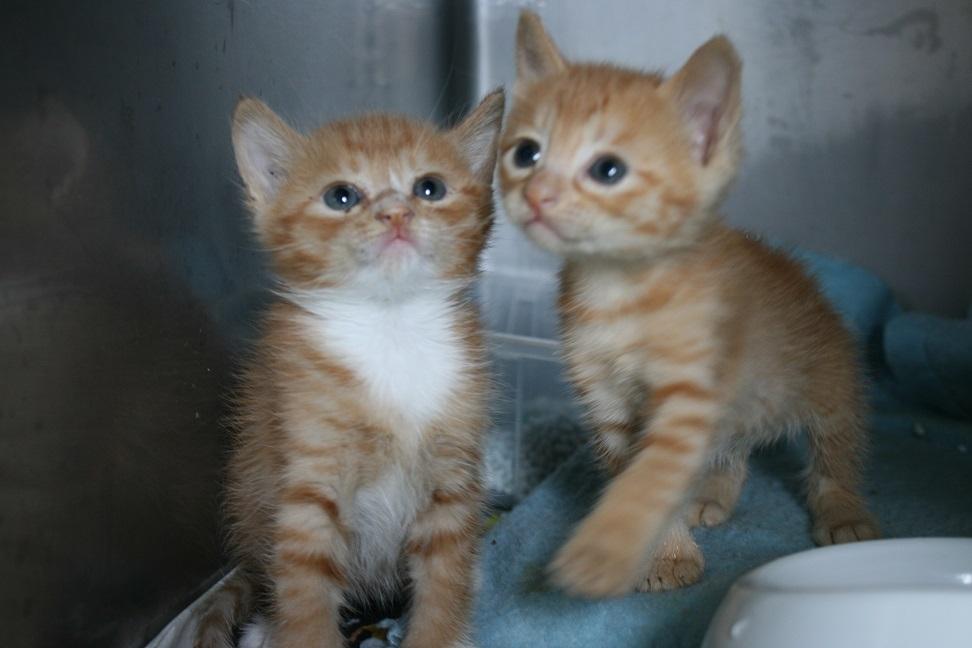 【移動先募集】センター(支所)収容の子猫・成猫(5/27訪問)_f0242002_11324045.jpg