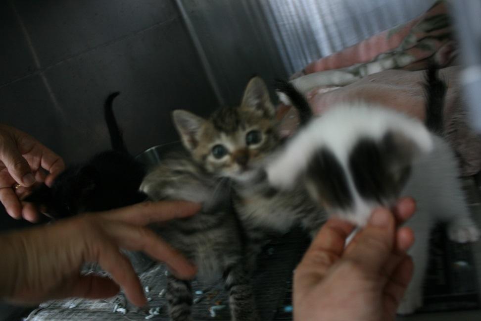 【移動先募集】センター(支所)収容の子猫・成猫(5/27訪問)_f0242002_11380529.jpg