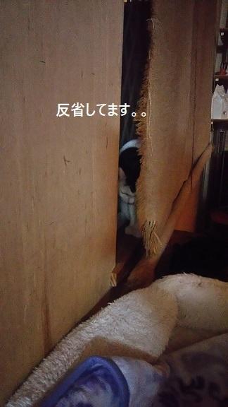 これは恐怖写真・・?_f0242002_21072641.jpg