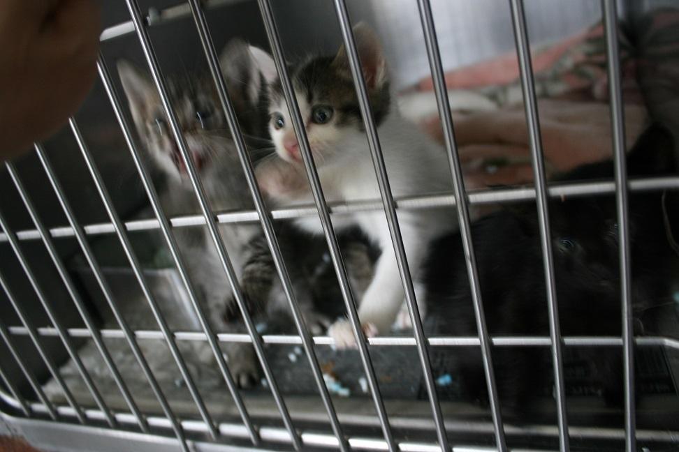 【移動先募集】センター(支所)収容の子猫・成猫(5/27訪問)_f0242002_21372268.jpg