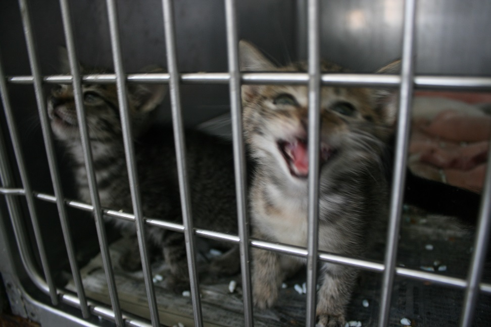 【移動先募集】センター(支所)収容の子猫・成猫(5/27訪問)_f0242002_21375528.jpg