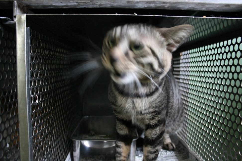 【移動先募集】センター(支所)収容の子猫・成猫(5/27訪問)_f0242002_21411296.jpg