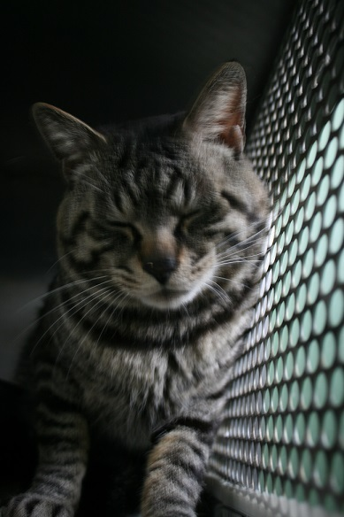 【移動先募集】センター(支所)収容の子猫・成猫(5/27訪問)_f0242002_21415214.jpg