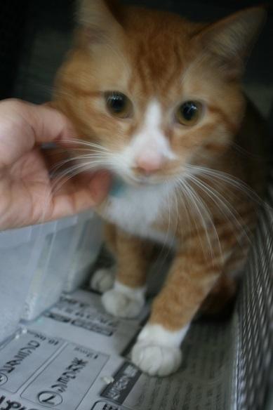【移動先募集】センター(支所)収容の子猫・成猫(5/27訪問)_f0242002_21423896.jpg