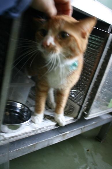 【移動先募集】センター(支所)収容の子猫・成猫(5/27訪問)_f0242002_21425505.jpg