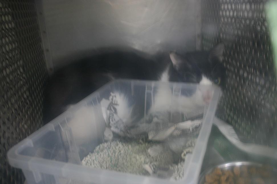 【移動先募集】センター(支所)収容の子猫・成猫(5/27訪問)_f0242002_22013484.jpg