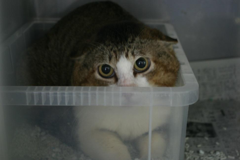 【移動先募集】センター(支所)収容の子猫・成猫(5/27訪問)_f0242002_22021690.jpg