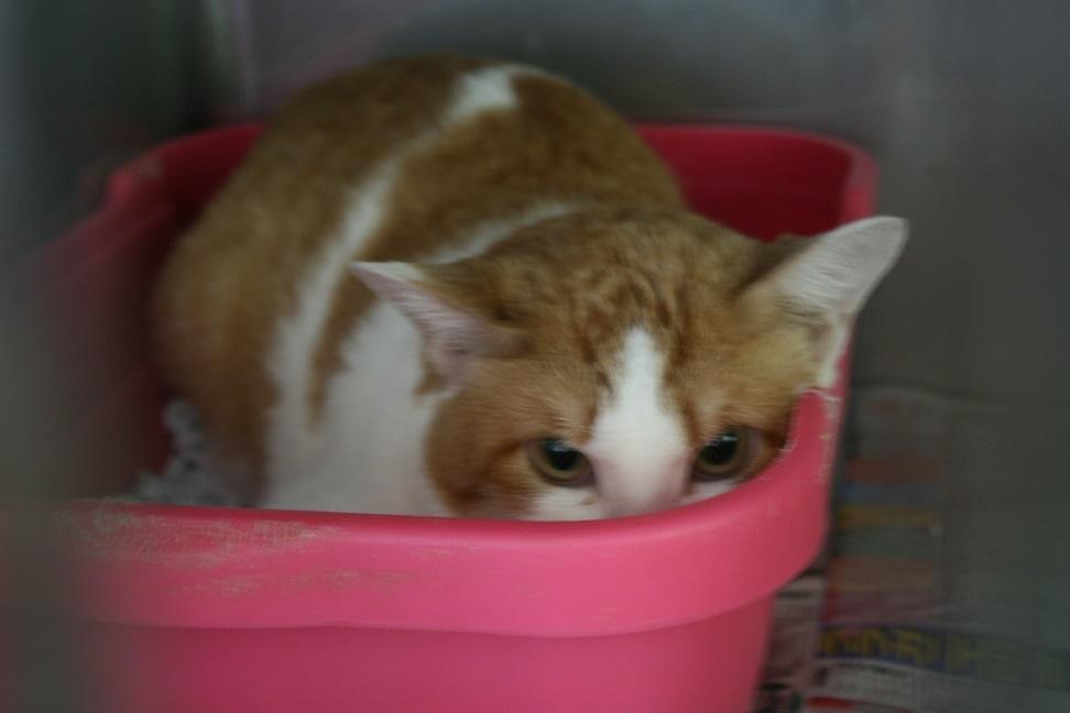 【移動先募集】センター(支所)収容の子猫・成猫(5/27訪問)_f0242002_22022269.jpg
