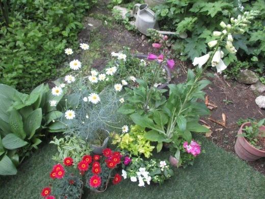 白い花の咲く頃は       5月28日_d0127634_10301455.jpg